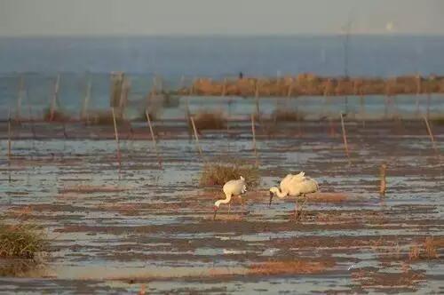 其中列入国家重点保护野生动物名录的鸟类13种