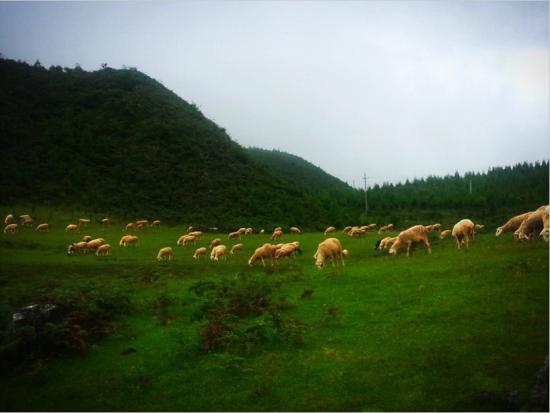 老阴山草场(图片来源:@他孜)