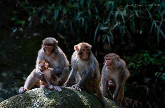 中国 广西 正文    这里的猴子常常是成群结队的,凡是见到猴子时,母后