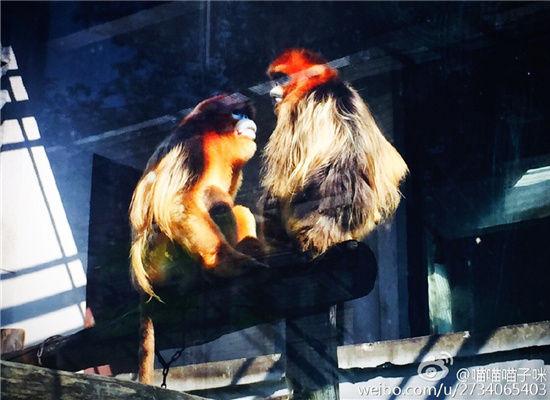 园内模拟灵掌类动物栖息地