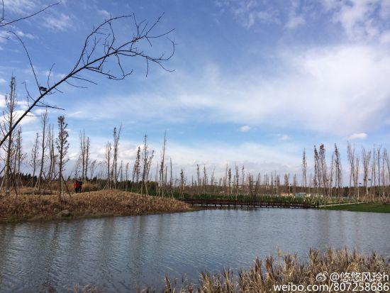 常熟湿地环境矢量图
