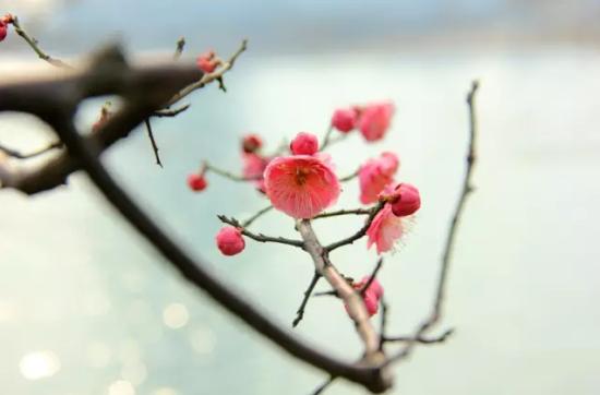 如何剪梅花步骤图解