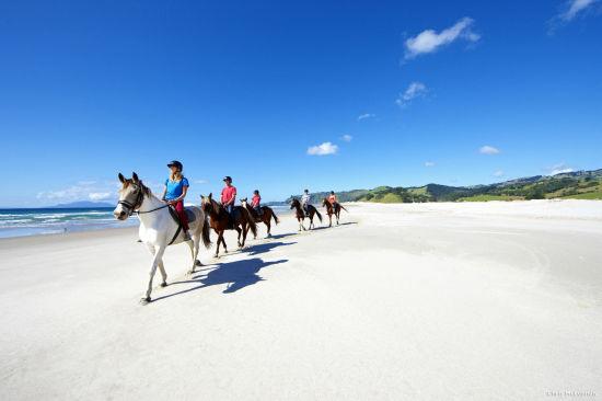 图注:纯白绝美的帕基里 来源:新西兰旅游局