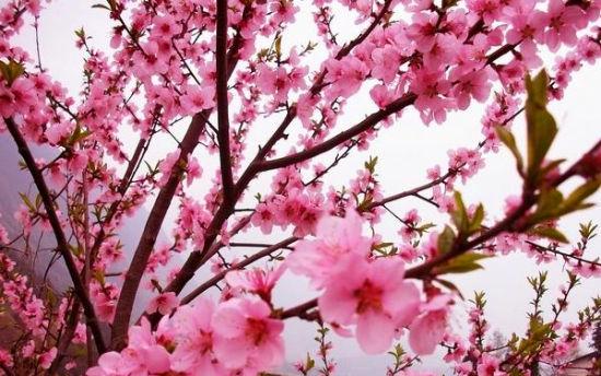 桃溪堡赏桃花