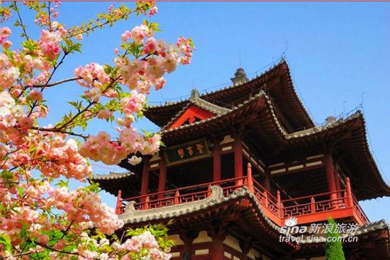 西安放风筝好去处 杜陵国家遗址公园
