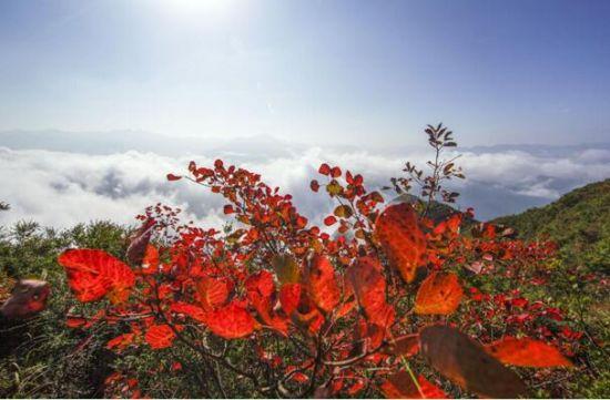 十万亩红叶浸染三峡 数万人涌入巫山邂逅红色浪漫