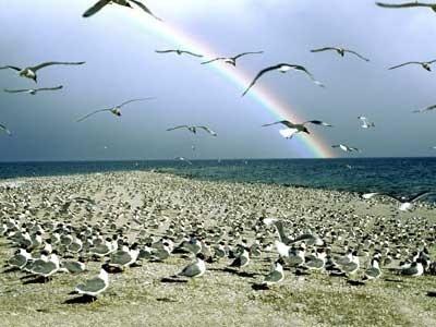 青海湖的明珠:鸟岛