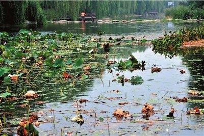 北京太平湖景区惨遭破坏 荷花被折垃圾遍湖(图