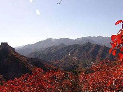北京深秋赏叶线路:八达岭国家森林公园(图)