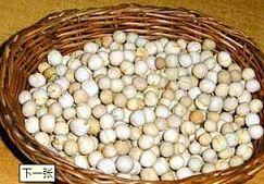 民间传统习俗:二月二龙抬头吃炒豆(图)