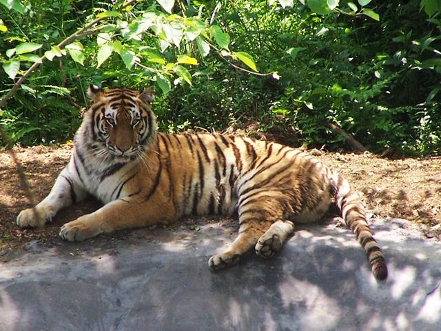大兴区野生动物园