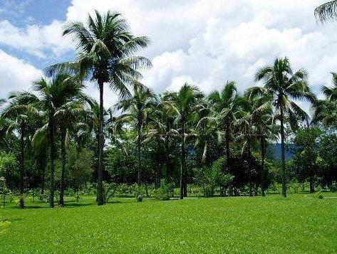 美国夏威夷:热带植物园