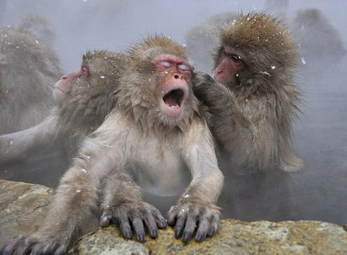 小猴在为母亲洗脸