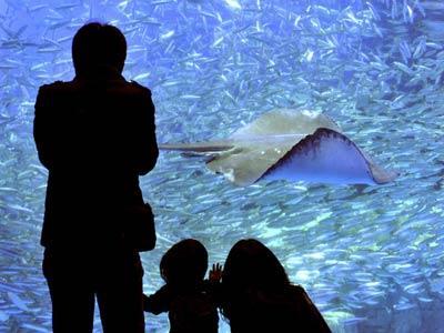 几名观众正在欣赏水下美景