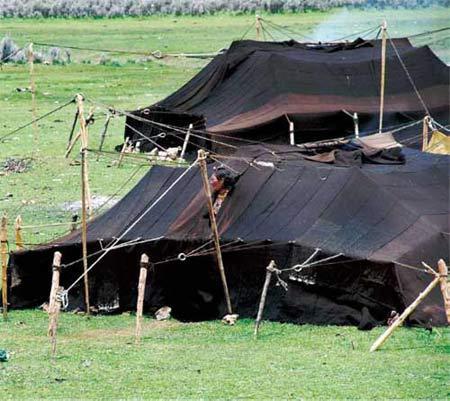 美玉草原上牧民人家过着宁静甜美的生活。黑色的牦牛毛帐篷就是牧民们温暖的家。