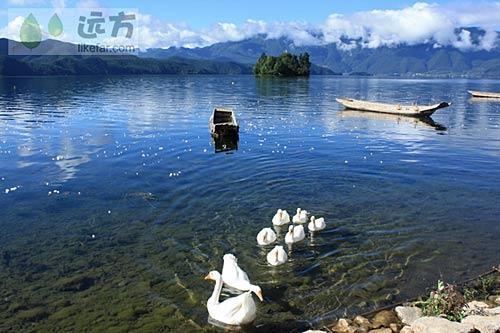 泸沽湖达祖村湖边,又名大嘴村 摄影: 游走