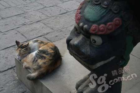 一只猫旁若无人地在平遥文庙前呼呼大睡