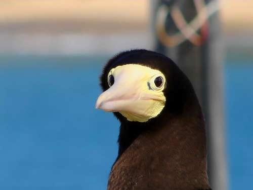 费尔南多-迪诺罗尼亚岛上的国家公园,许多动物和鸟类在这里栖息