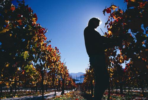 奥塔格中部的葡萄园