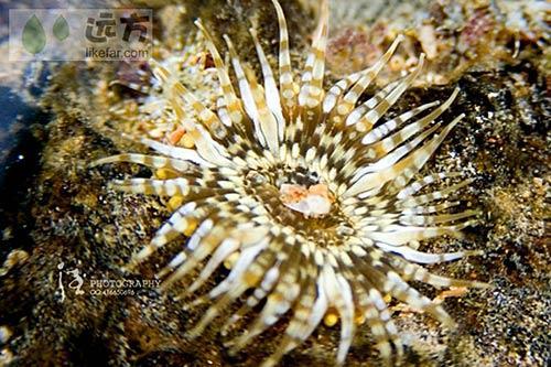 美丽的珊瑚 作者:以德服人