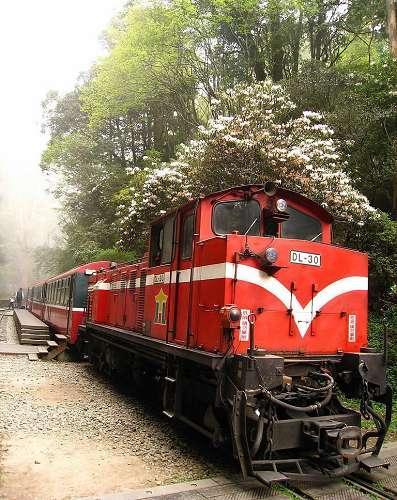 台湾阿里山的小火车