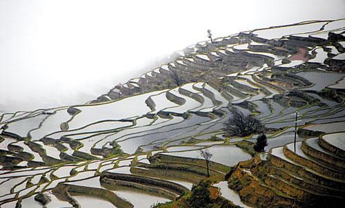 元阳开春灌水养田时线条最美 辛荷 摄