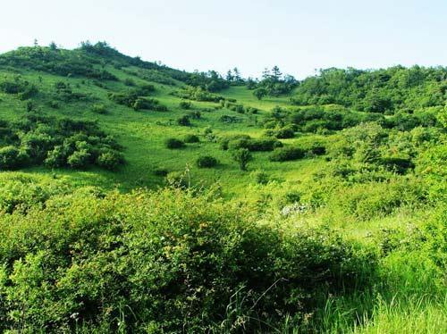 穿越平和梁高山草甸