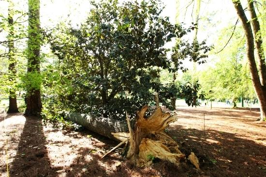热度-奥古斯塔的回忆60棵木兰树和创立者冰球广场图文图片