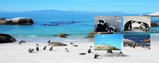 12 企鹅岛