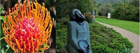 神奇的热带植物