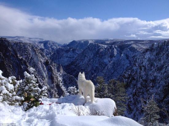 远眺远方雪景。