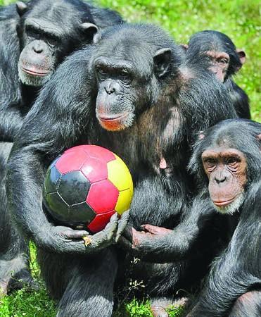 世界杯不光是人类的盛会,动物们也乐在其中不能自拔.