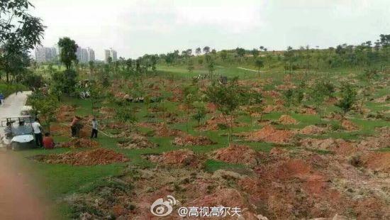 球场被铲惨状(图片来源:高视高尔夫微博)