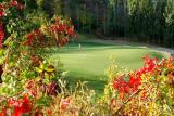 图文-太伟高尔夫球场美景图果岭边危机四伏