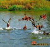 图文-上海美兰湖高尔夫俱乐部美景生态环境一流