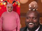 视频-TNT搞笑论生肖 奥胖学老鼠嘲笑巴克利怕兔子
