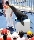 图文-奥运冠军畅游香港海洋公园 海狮也爱冠军