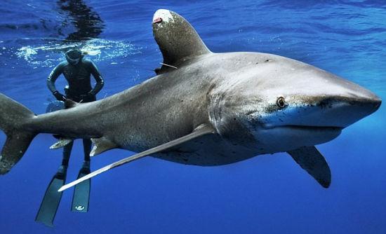 美国女子深海与鲨鱼共舞呼吁保护动物