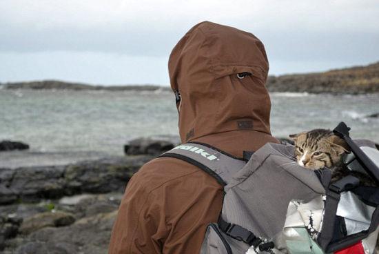 <b>英国小猫酷爱探险搭乘主人背包户外旅行</b>